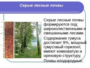 Серые лесные почвы Серые лесные почвы формируются под широколиственными и сме