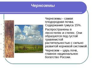 Черноземы Черноземы - самая плодородная почва. Содержания гумуса 15%. Распрос