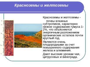 Красноземы и желтоземы Красноземы и желтоземы - почвы влажных субтропиков, ха