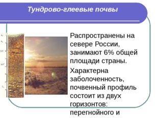 Тундрово-глеевые почвы Распространены на севере России, занимают 6% общей пло