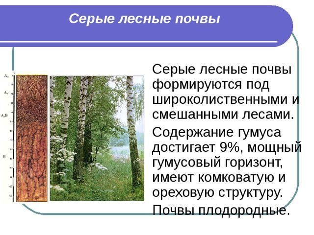 Серые лесные почвы Серые лесные почвы формируются под широколиственными и сме...