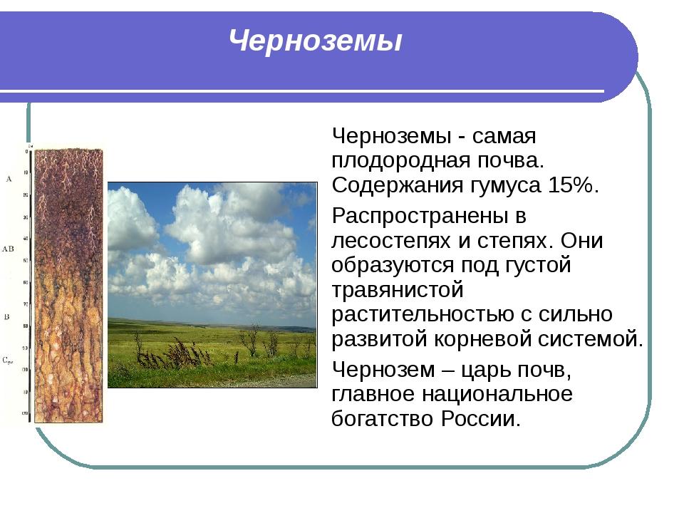 Черноземы Черноземы - самая плодородная почва. Содержания гумуса 15%. Распрос...