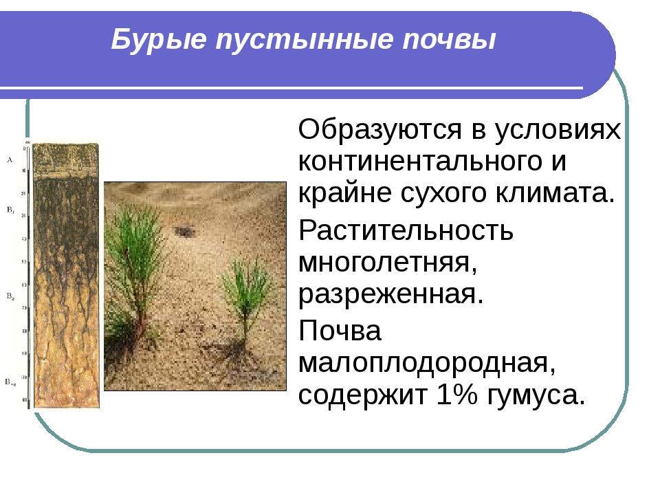 Бурые пустынные почвы Образуются в условиях континентального и крайне сухого...