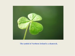 The symbol of Northern Ireland is a shamrock.