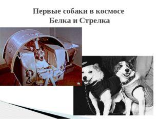 Первые собаки в космосе Белка и Стрелка