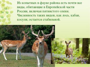 Из копытных в фауне района есть почти все виды, обитающие в Европейской части
