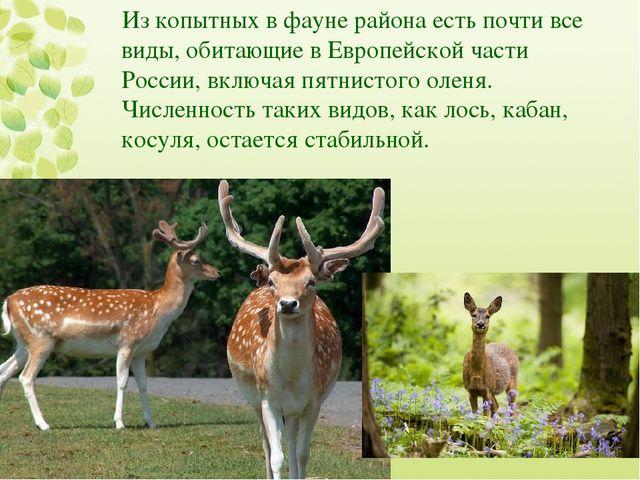 Из копытных в фауне района есть почти все виды, обитающие в Европейской части...