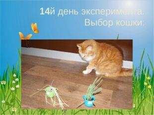14й день эксперимента. Выбор кошки: