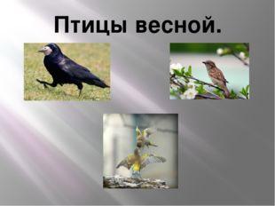 Птицы весной.