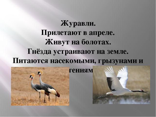 Журавли. Прилетают в апреле. Живут на болотах. Гнёзда устраивают на земле. Пи...