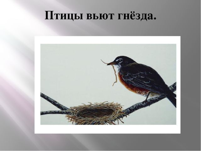 Птицы вьют гнёзда.