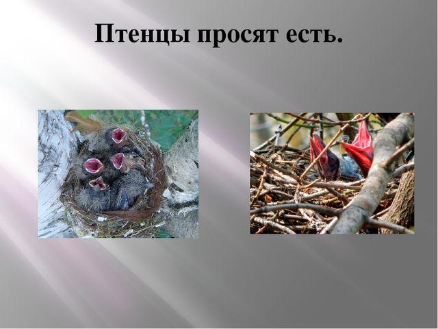 Птенцы просят есть.