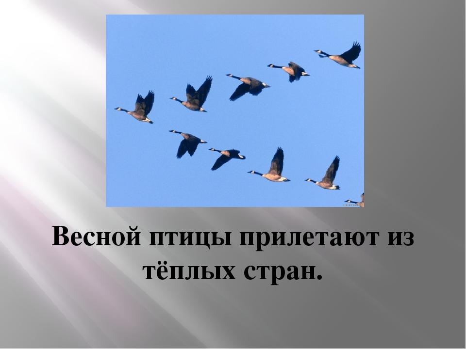 Весной птицы прилетают из тёплых стран.