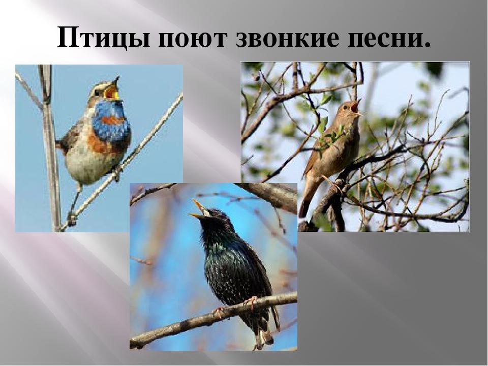 Птицы поют звонкие песни.