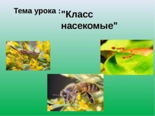 """Тема урока : """"Класс насекомые"""""""