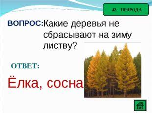 42. ПРИРОДА ВОПРОС: Какие деревья не сбрасывают на зиму листву? ОТВЕТ: Ёлка,