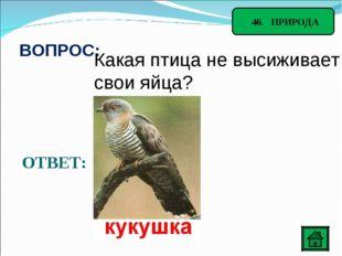 46. ПРИРОДА ВОПРОС: Какая птица не высиживает свои яйца? ОТВЕТ: