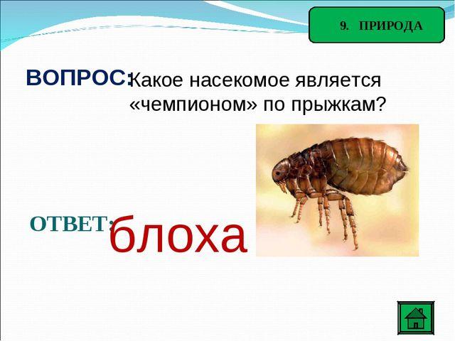 9. ПРИРОДА ВОПРОС: Какое насекомое является «чемпионом» по прыжкам? ОТВЕТ: б...