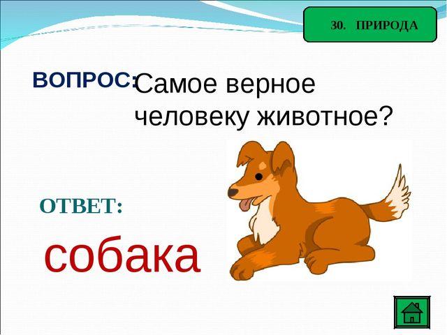 30. ПРИРОДА ВОПРОС: Самое верное человеку животное? ОТВЕТ: собака