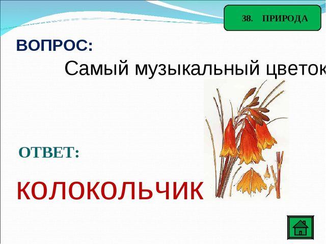 38. ПРИРОДА ВОПРОС: Самый музыкальный цветок ОТВЕТ: колокольчик