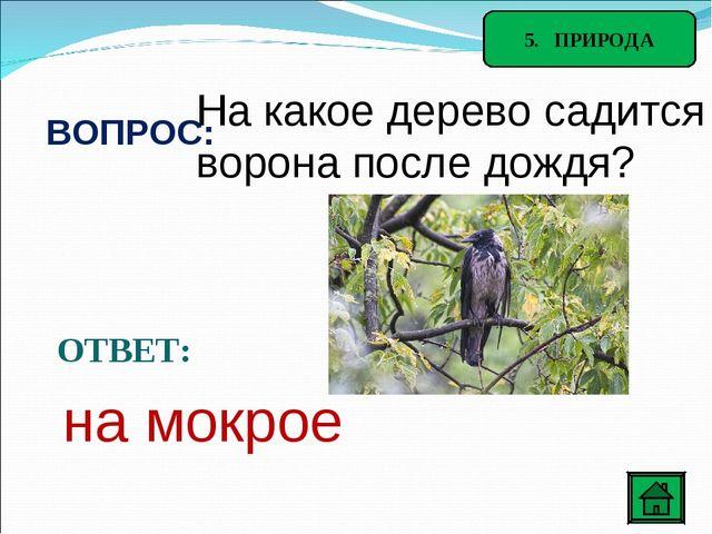 5. ПРИРОДА ВОПРОС: На какое дерево садится ворона после дождя? ОТВЕТ: на мокрое