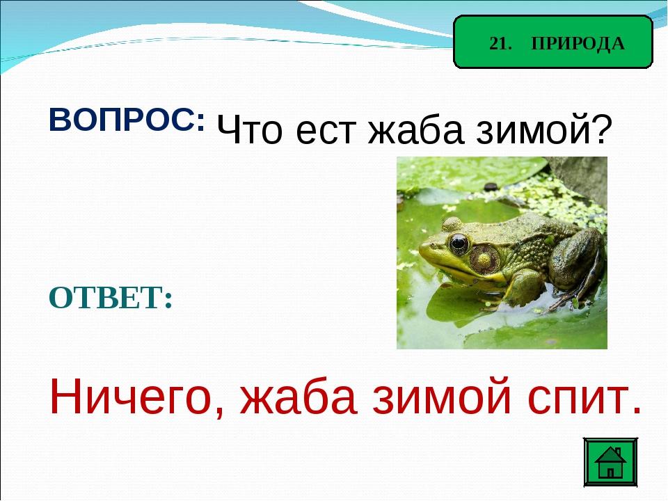 21. ПРИРОДА ВОПРОС: Что ест жаба зимой? ОТВЕТ: Ничего, жаба зимой спит.