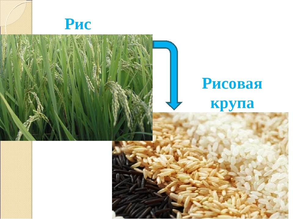 Рисовая крупа Рис