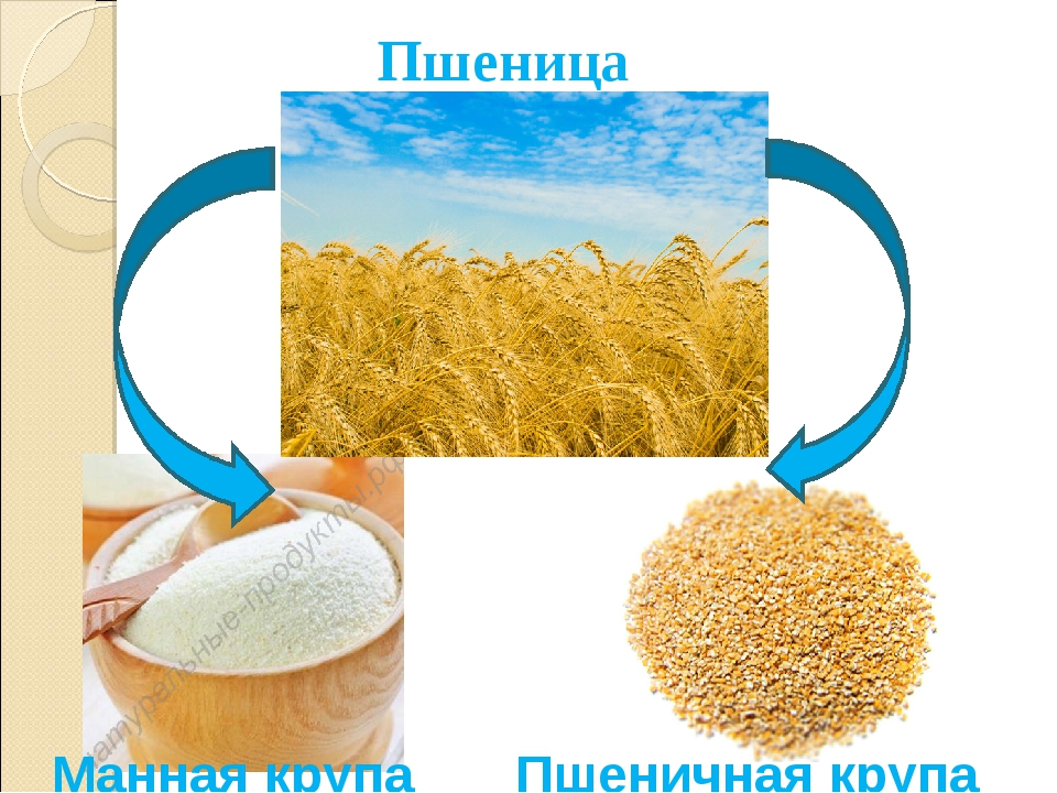 Пшеница Манная крупа Пшеничная крупа
