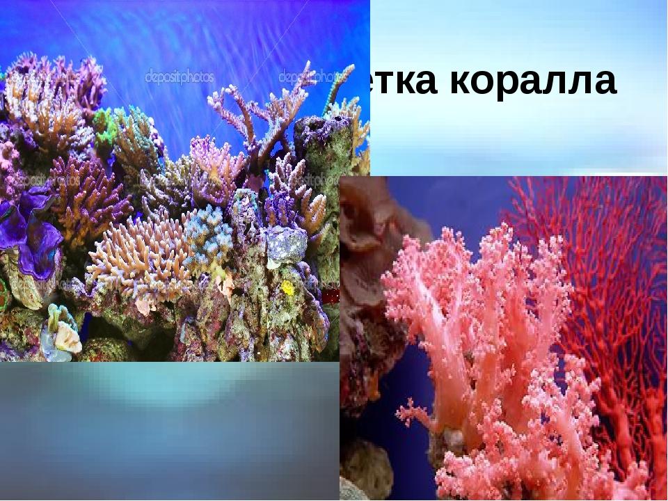 Ветка коралла