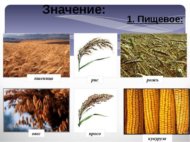 1. Пищевое: рис рожь просо овес кукуруза пшеница Значение: