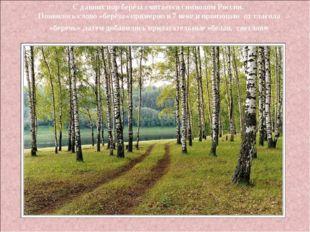 С давних пор берёза считается символом России. Появилось слово «берёза» приме