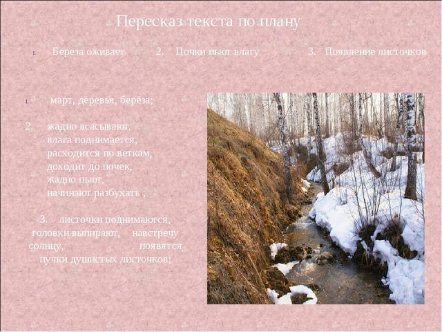 Пересказ текста по плану март, деревья, берёза; 2. жадно всасывают, влага под...