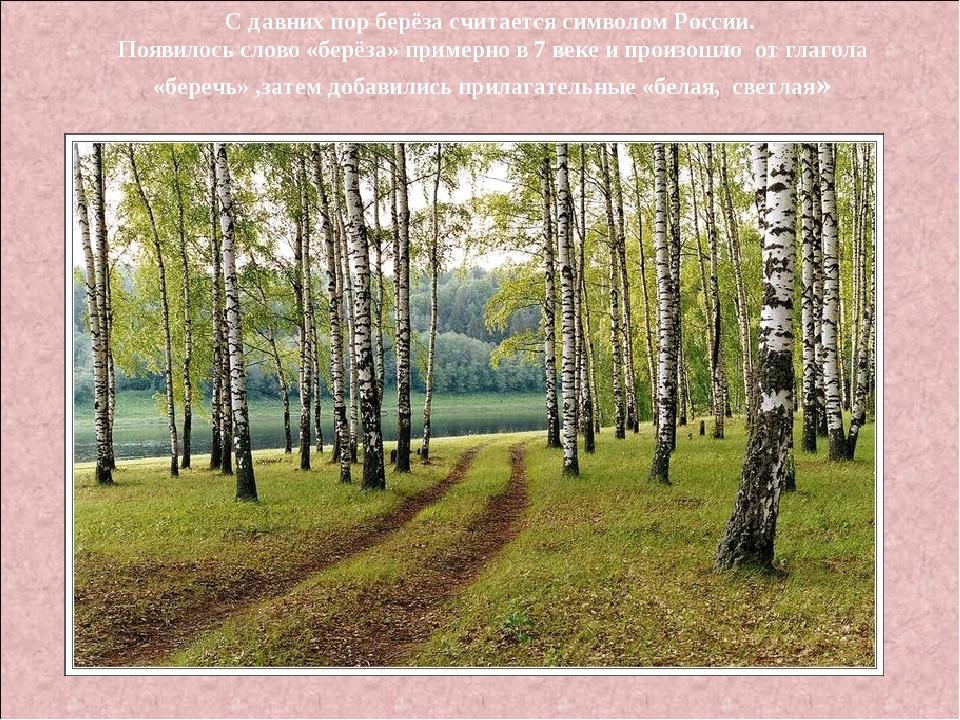 С давних пор берёза считается символом России. Появилось слово «берёза» приме...
