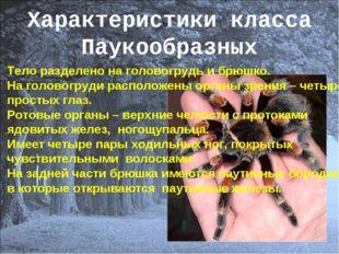 Характеристики класса Паукообразных Тело разделено на головогрудь и брюшко. Н