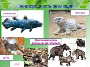 Неоднородность эволюции латимерия готтерия Направленность эволюции на прогрес