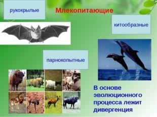 Млекопитающие рукокрылые парнокопытные китообразные В основе эволюционного пр