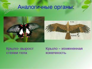 Аналогичные органы: Крыло- вырост стенки тела Крыло – измененная конечность