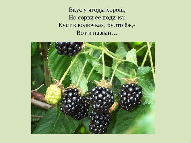 Вкус у ягоды хорош, Но сорви её поди-ка: Куст в колючках, будто ёж,- Вот и на...