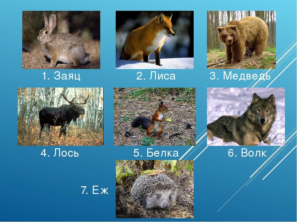 1. Заяц 2. Лиса 3. Медведь 4. Лось 5. Белка 6. Волк 7. Еж