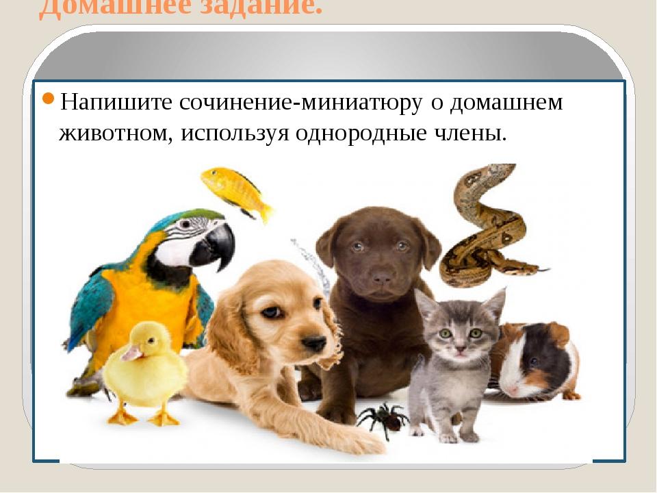 Домашнее задание. Напишите сочинение-миниатюру о домашнем животном, используя...