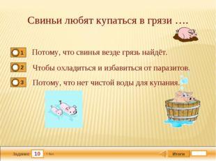 10 Задание Свиньи любят купаться в грязи …. Потому, что свинья везде грязь на