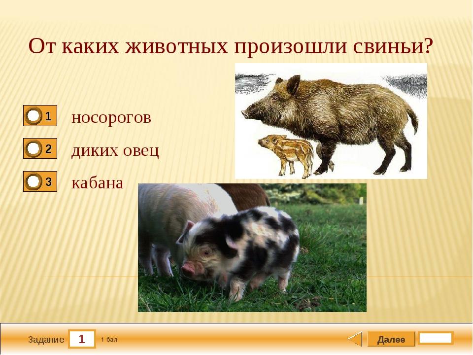 1 Задание От каких животных произошли свиньи? носорогов диких овец кабана Дал...