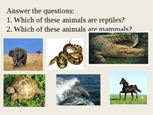 Answer the questions: 1. Which of these animals are reptiles? 2. Which of th
