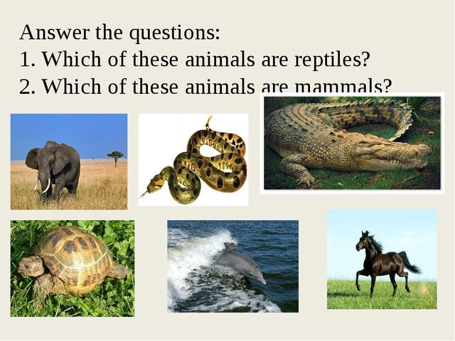 Answer the questions: 1. Which of these animals are reptiles? 2. Which of th...
