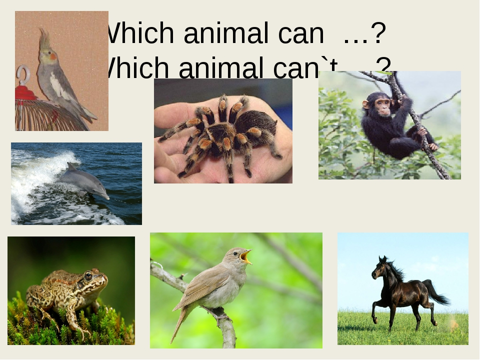 Which animal can …? Which animal can`t …?