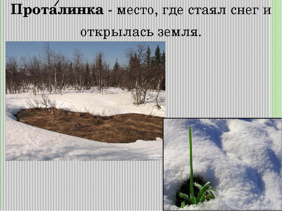 Проталинка- место, где стаял снег и открылась земля.