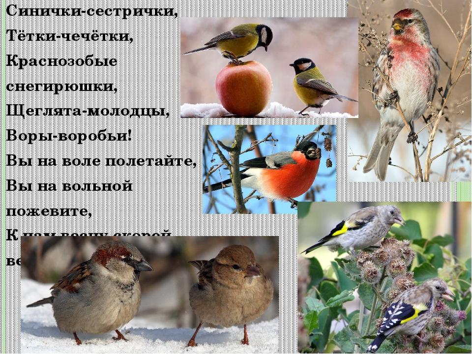 Синички-сестрички, Тётки-чечётки, Краснозобыеснегирюшки, Щеглята-молодцы, Вор...