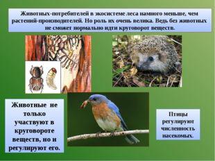 Животных-потребителей в экосистеме леса намного меньше, чем растений-производ