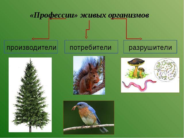 «Профессии» живых организмов производители потребители разрушители