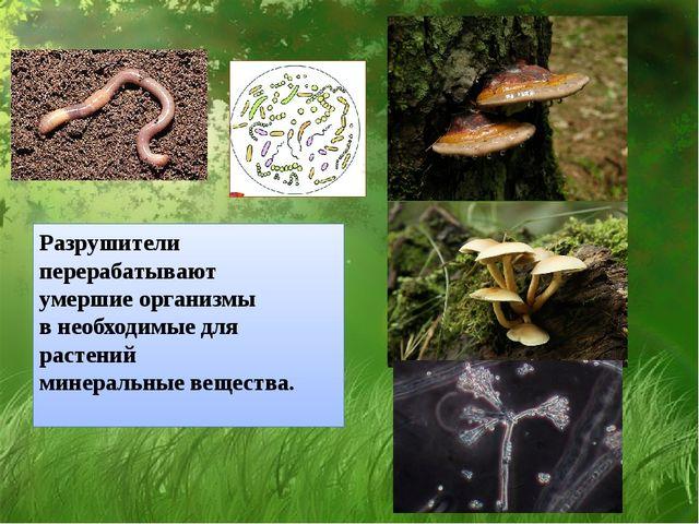 Разрушители перерабатывают умершие организмы в необходимые для растений минер...